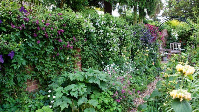 Wall in garden covered in climbing plants