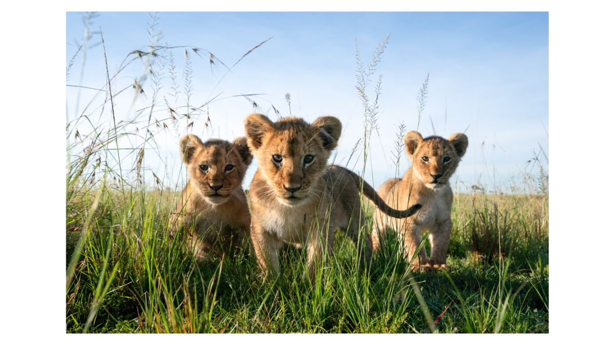 Get a print from one of the biggest names in wildlife photography