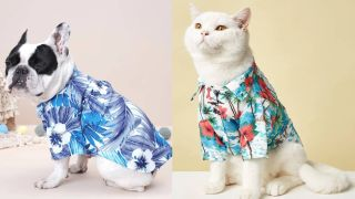 A dog and a cat wearing shein hawaiian shirts for pets