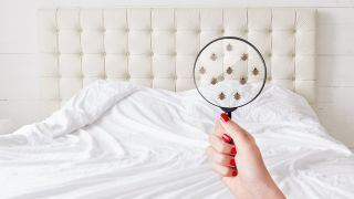 How to identify bed bugs, and how to get them out of your mattress