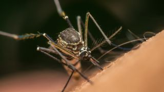 Malaria is a mosquito-borne disease that kills hundreds of thousands of people every year.