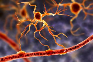 Illustration of astrocytes in the brain.