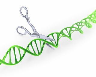 A scissors cuts up a piece of DNA.