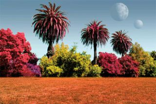 Colorful Worlds: Plants on Other Planets Might Not Be Green