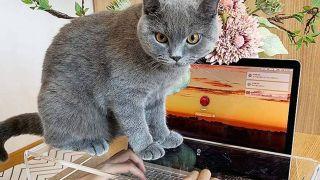 cat-proof laptop keyboard