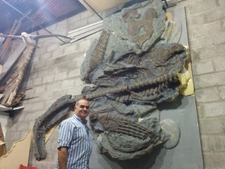 The head and part of the neck are missing, but the reptile's long flippers, ribs and spine are in excellent condition