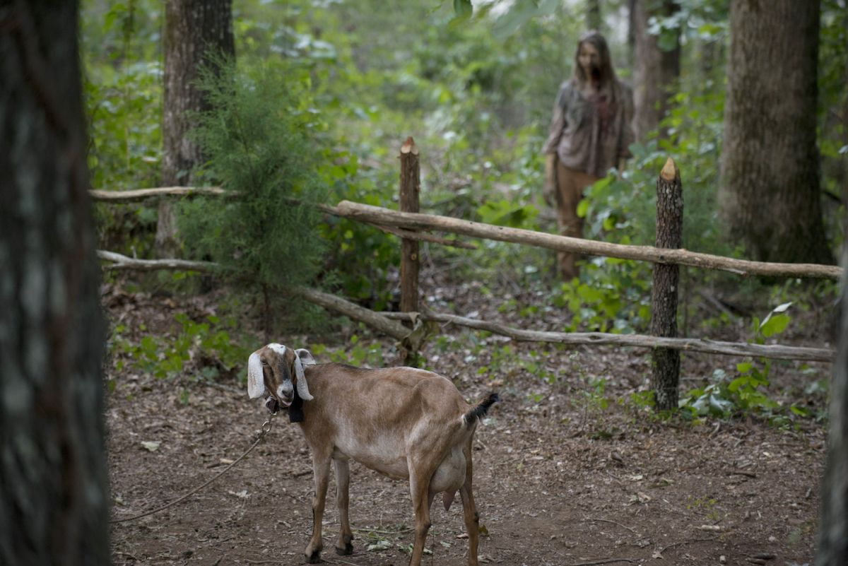 Why Don't Animals Turn into Zombies in 'The Walking Dead