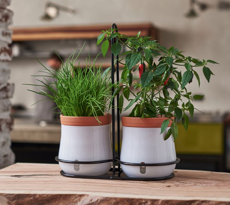 Top five self watering planters