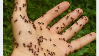 Ants all over