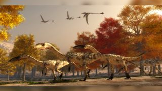 A group of Coelophysis, bipedal dinosaurs that lived during the Triassic period.