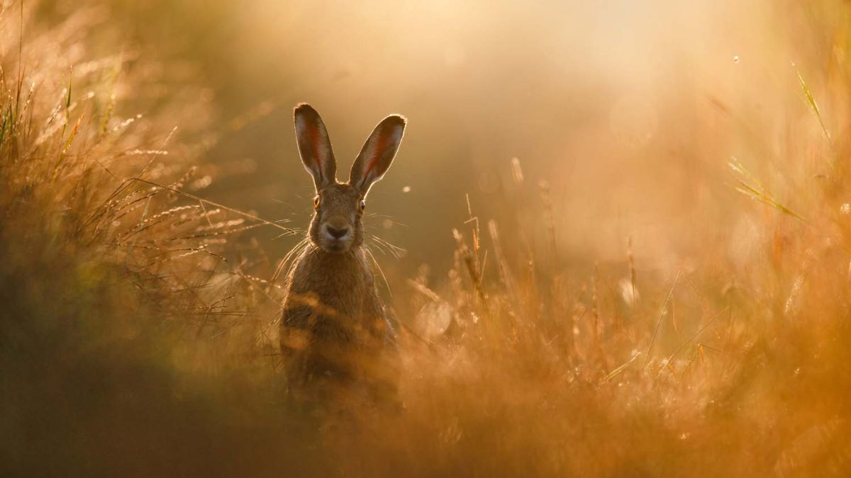 Incredible image of hare scoops major wildlife photography prize