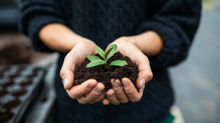 pH of soil : woman holding soil and seedling in hands