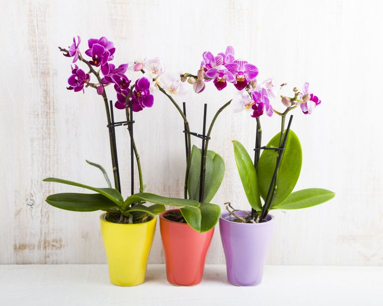 Hardest houseplants to keep alive orchid