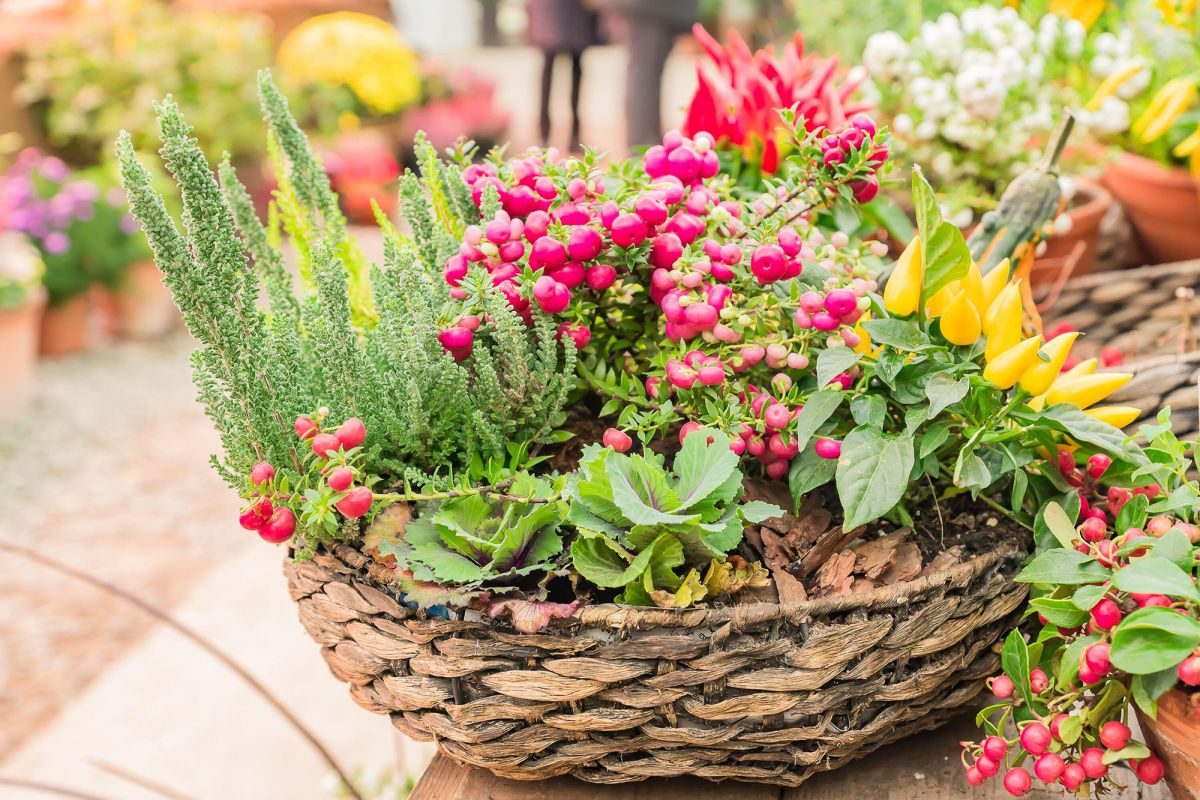 Winter hanging basket ideas – 12 pretty ways to show off winter blooms