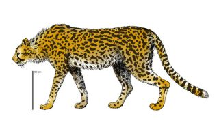 largest extinct cheetah