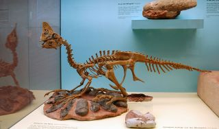 Oviraptor skeleton and eggs
