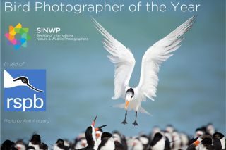 SINWP Bird Photographer of the Year 2019 in aid of RSPB open for entries