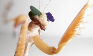a mantis insect wearing tiny spectacles