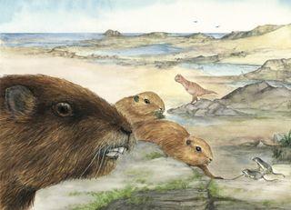 Gondwana mammal drawing