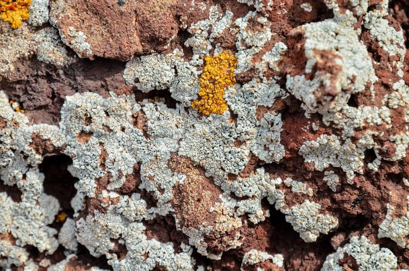 Men Are Being Warned Not to Eat Lichen Touted as `Natural Viagra`