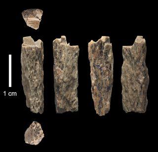 denisovan Neanderthal hybrid bone