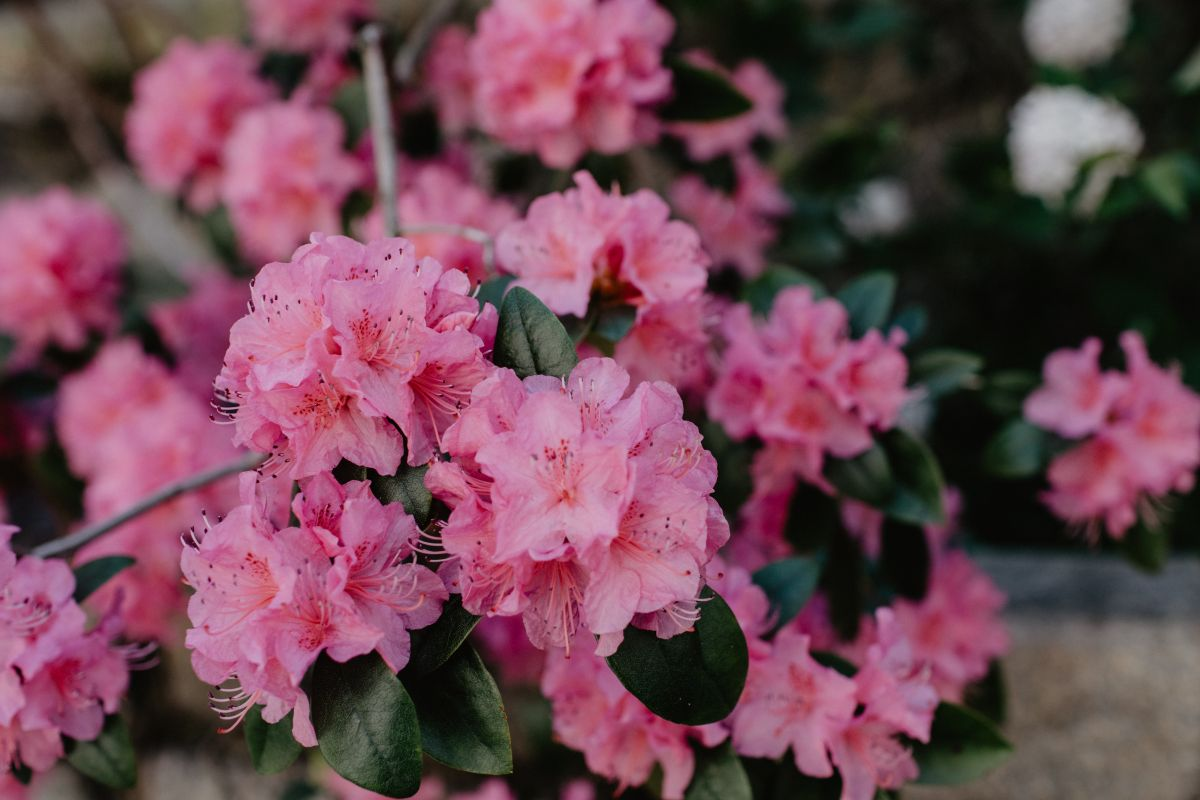 10 shade plants – best flowering and evergreen plants for low-light gardens