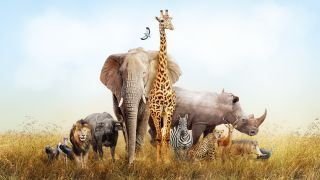 Most mammal species exist for 1 million to 2 million years.