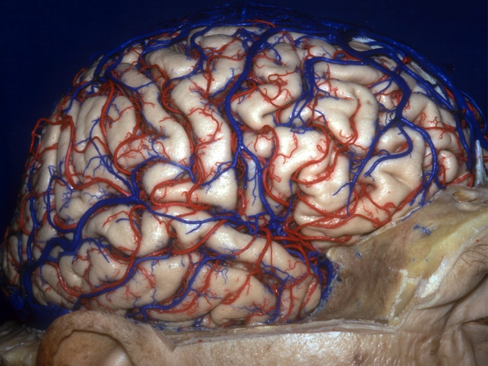 3D Images: Exploring the Human Brain | Live Science