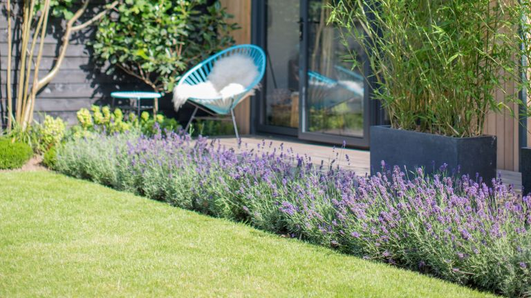 lawn with a lavender border and chair
