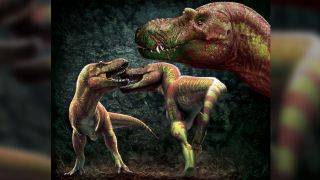 Tyrannosaurs may have fought each other for mates, territory or higher status, a new study finds.