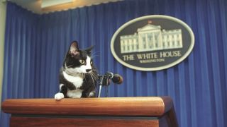 Joe Biden's new cat will join Socks in the list of famous White House cats