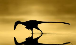A silhouetted dinosaur is fishing in a yellow background.
