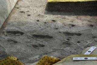 Australopithecus tracks at Laetoli, Tanzania.