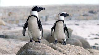 Penguin town netflix
