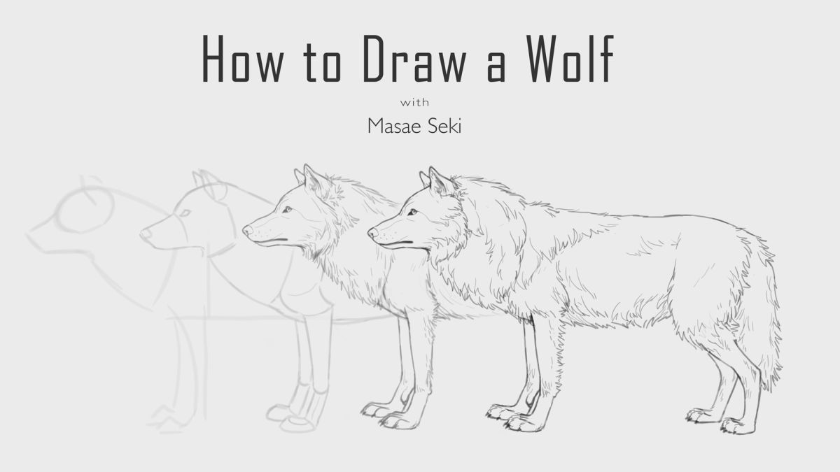 How To Draw A Wolf Creative Bloq