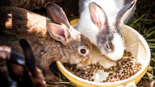 Five do's and don'ts of feeding rabbits correctly