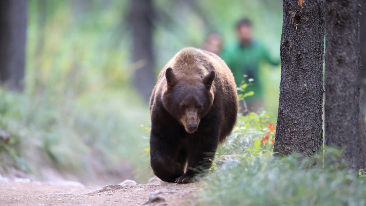 What to do if you meet a bear in the wilderness