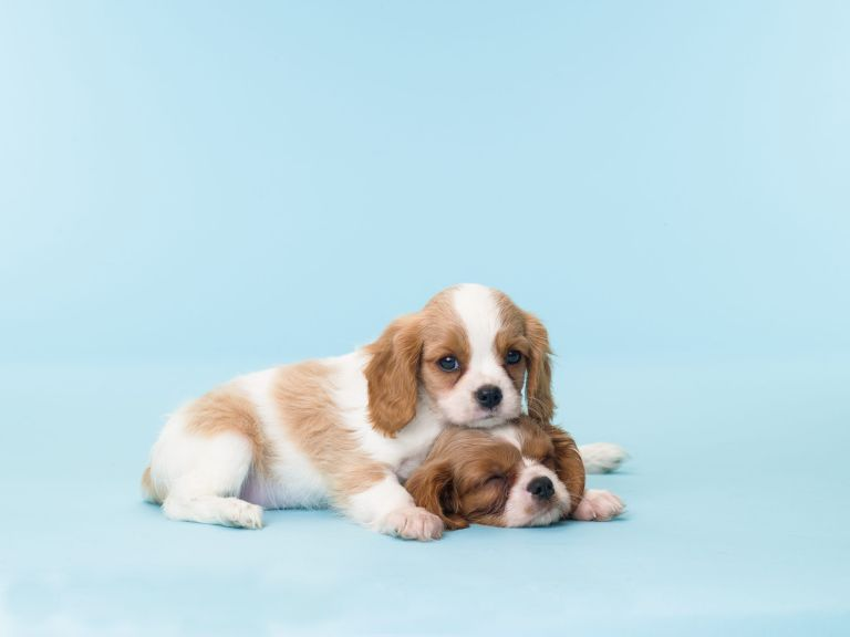 which dog breeds are most expensive?
