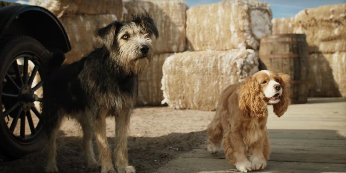 Disney+'s Lady And The Tramp Trailer Brings The Classic Love Story To Live Action