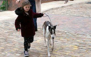 Coronation Street spoilers: Hope Stape loses Ceberus!
