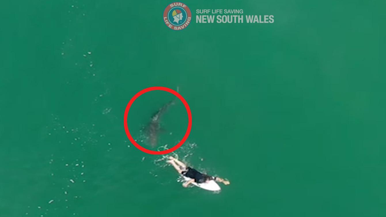 Tiburones en 2020: 6 casos que nos sorprendieron.
