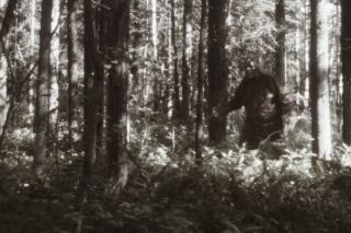 Blurry image of a supposed Bigfoot sighting.
