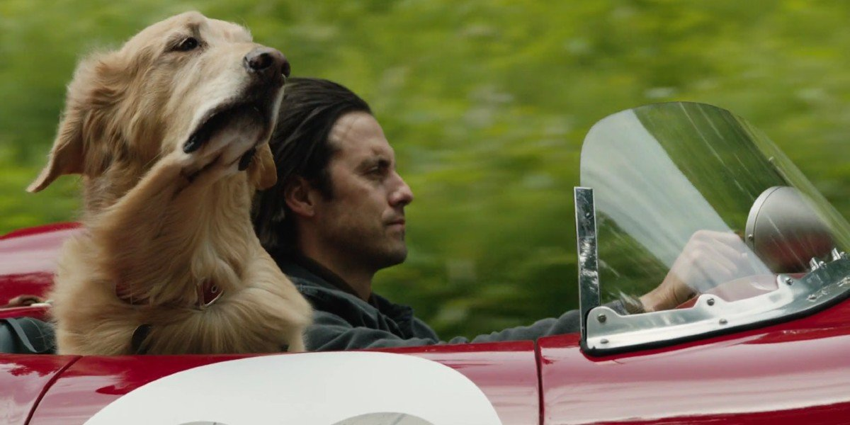 Milo Ventimiglia and the dog who plays Enzo in The Art of Racing in the Rain