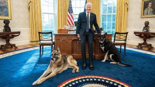 Joe Biden's dog Major with Champ in the oval office
