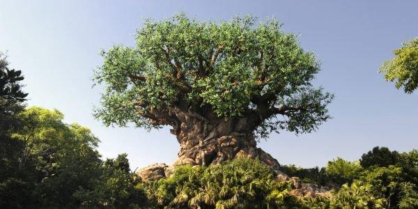 Animal Kingdom at Disney World's Tree of Life