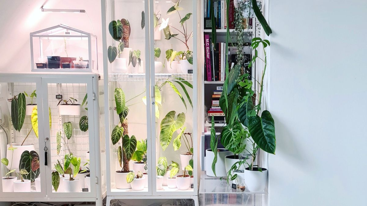 The IKEA greenhouse cabinet is the ultimate IKEA hack for houseplant fans