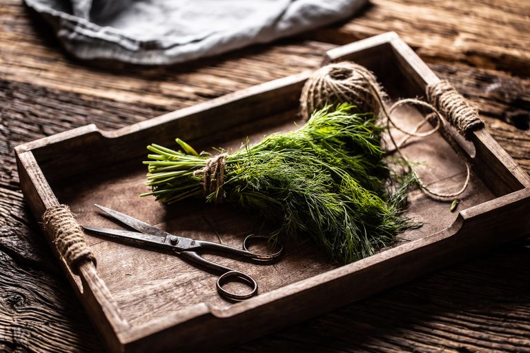 how to prune dill fresh green dill in wooden box on rustic oak table