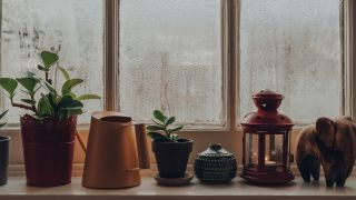 what is relative humidity: image shows plants in front of window with condensation