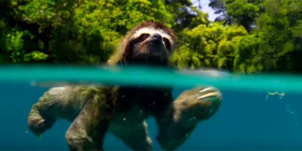 adorable swimming animal