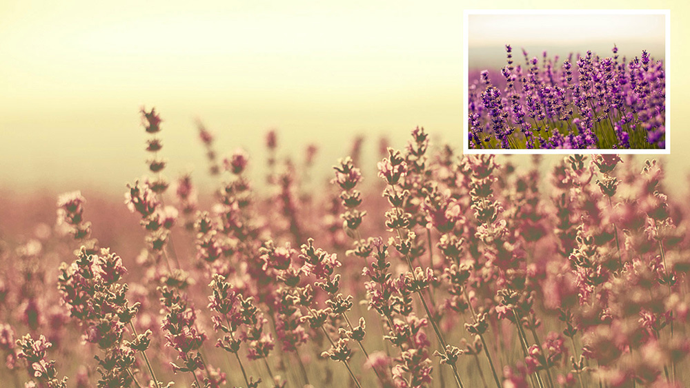 54 free Photoshop actions | Creative Bloq